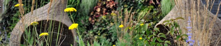 cropped-sensory-garden.jpg