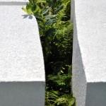 Detail of garden